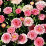 Tipps für die Fotografie von Blumen